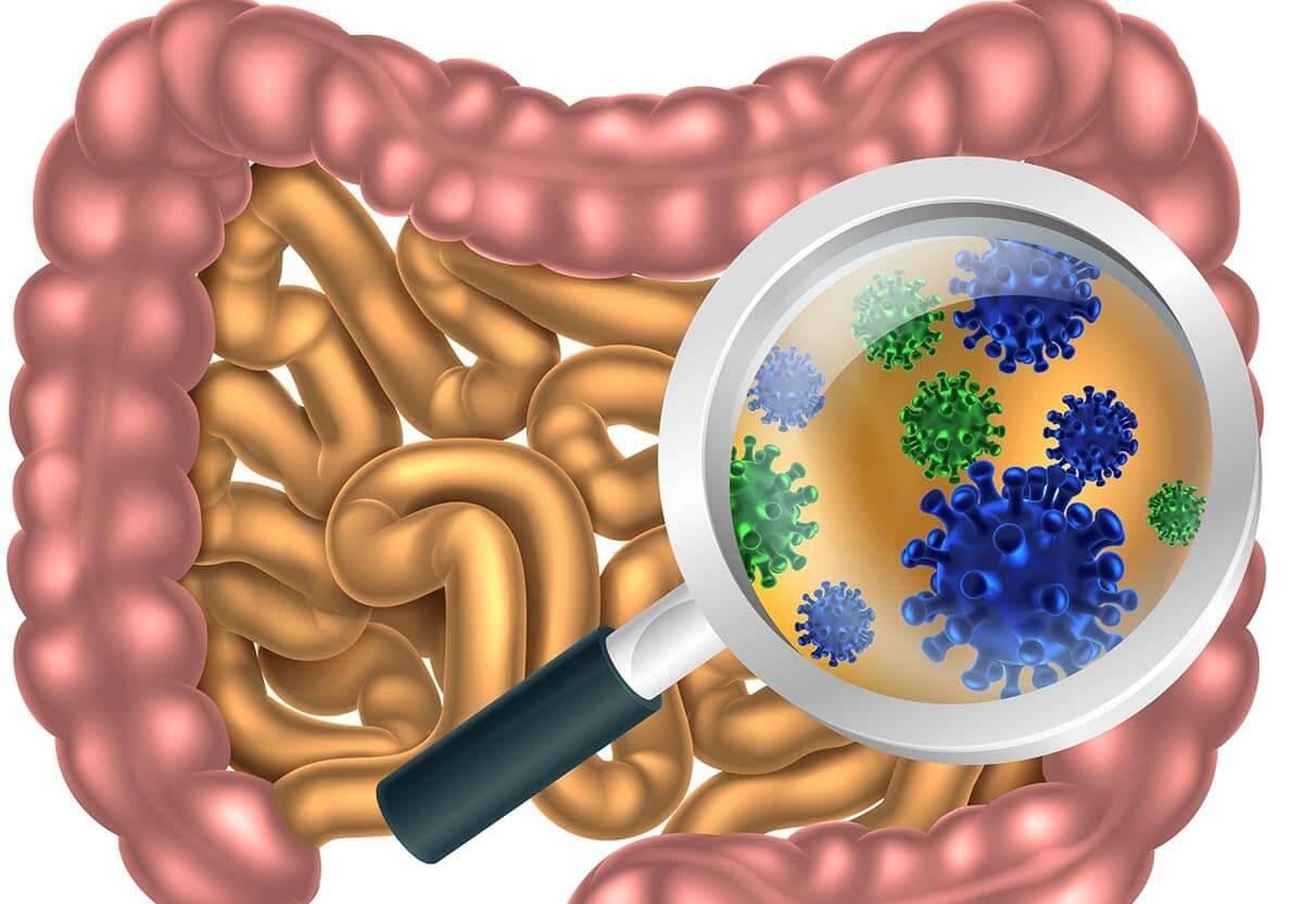 Trong Nấm Vân chi có chứa prebiotic, giúp nuôi dưỡng các vi khuẩn có lợi.